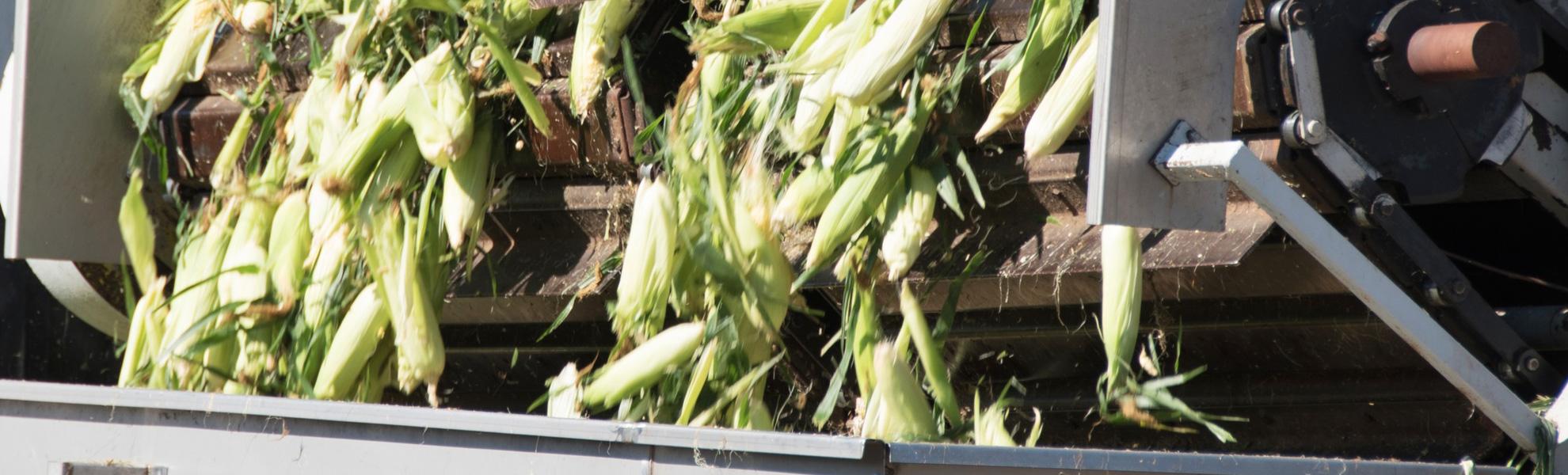 CICSA sistemi a catena per l'industria alimentare
